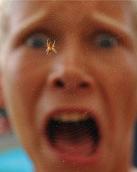 Kind, das Angst vor einer Spinne hat - © dennisjacobsen - Fotolia.com